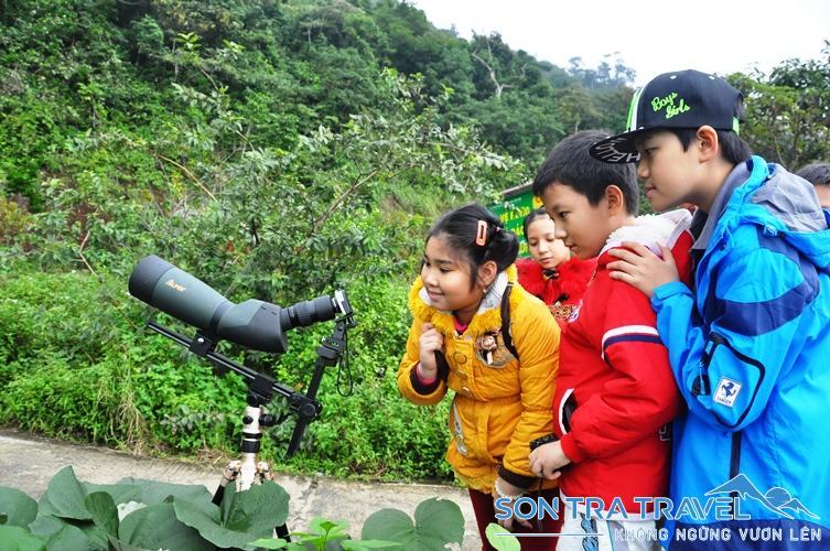 """Về thăm """"núi khỉ"""" Sơn Trà - ThienNhien.Net   Con người và Thiên nhiên"""